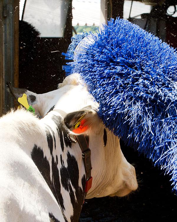 Für unsere Kühe tun wir alles